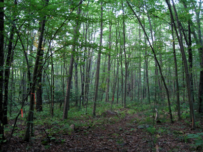 Forest in Westboro Wildlife Management Area