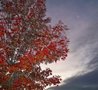 Fall Sky, by James McAlice